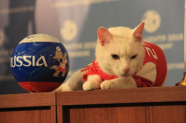 Кот Ахилл предсказал трудную победу сборной России