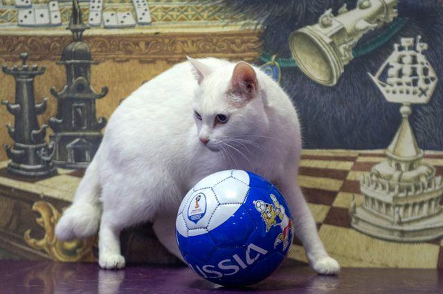 Эрмитажный кот-оракул Ахилл.