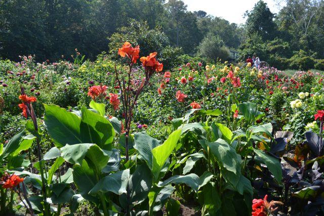 Цветы и деревья приносят к лету красоту и аллергию.