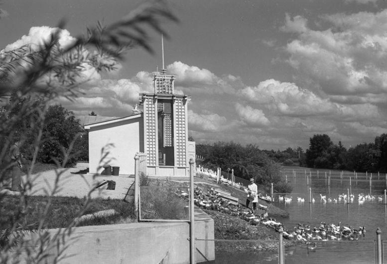 Пруд для водоплавающих птиц на территории ВСХВ. 1939 год.