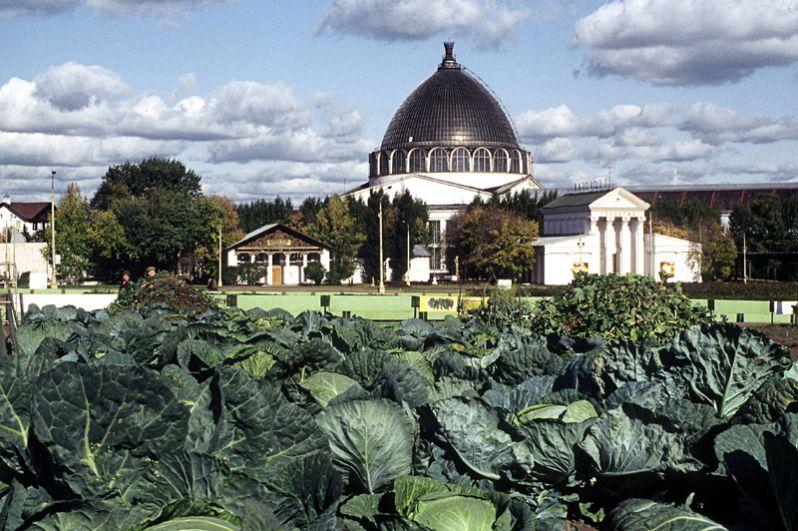 Элитный сорт капусты демонстрируется на Выставке достижений народного хозяйства. 1984 год.