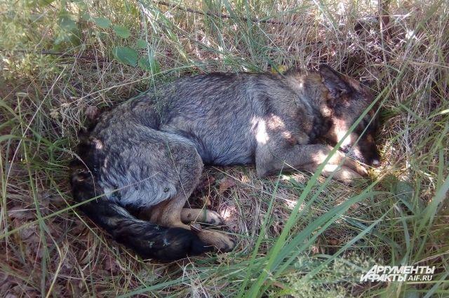 В Светлом двое мужчин избили молодую собаку.
