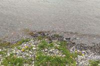 Берег реки не выглядит благоустроенным.