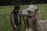 Верблюд не всегда доверяет человеку.