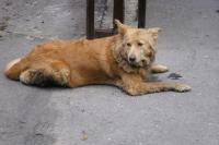 В Лабытнанги решают, что делать с бездомными собаками