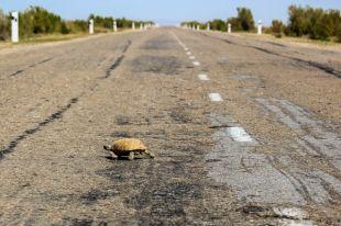 В Восточном округе Тюмени проводится масштабный ремонт дороги