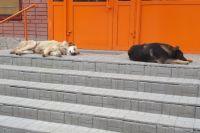 Собаки на крыльце магазина. Тюмень.