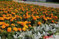 Более 90 тысяч цветов украсят Салехард этим летом
