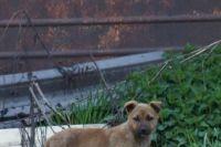 Тюменцы обеспокоены судьбой щенка, застрявшего в бетонной трубе