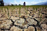 В Минагро объяснили, чего ожидать от урожая в Украине в связи с засухой