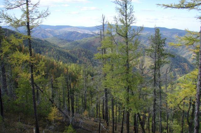 Действующих лесных пожаров на Ямале не обнаружено