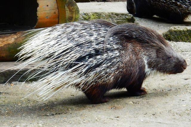 В Тюменском зоопарке появилось потомство у Клайда и Бонни