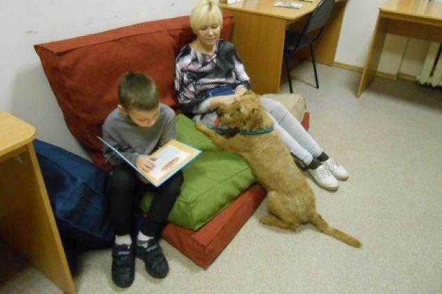Детям помогают три собаки канистерапевта Елены Дюковой – ирландский терьер Ника, бордер-колли Кода и шелти Мона.