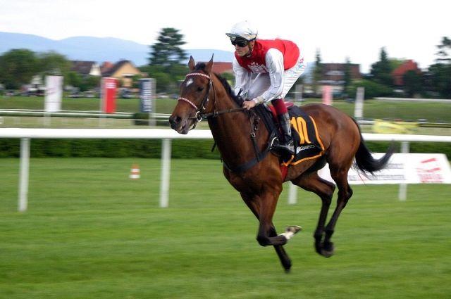 Новокузнечане и гости города смогут посетить конные соревнования в Саду Металлургов.