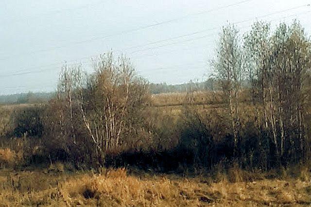 Суд обязал тюменскую компанию провести рекультивацию лесного участка