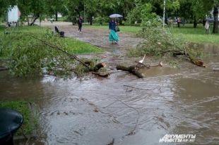 Ураганный ветер в Перми валил деревья и срывал крыши
