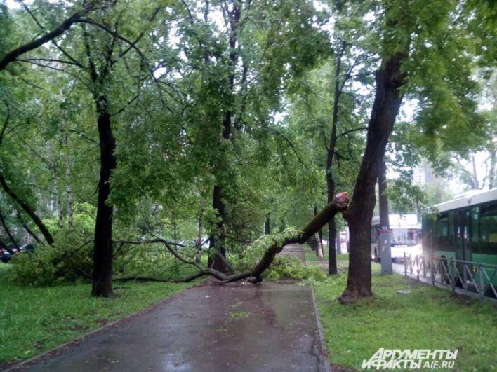 Тротуары оказались перегорожен упавшими деревьями.