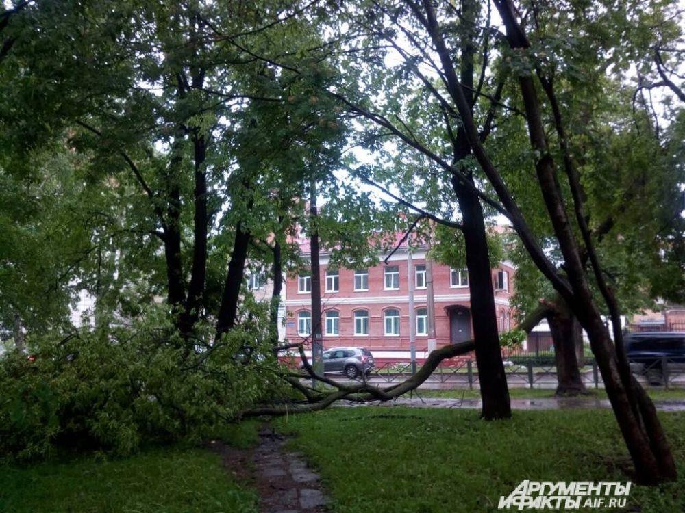 По улице Пушкина повалило деревья.