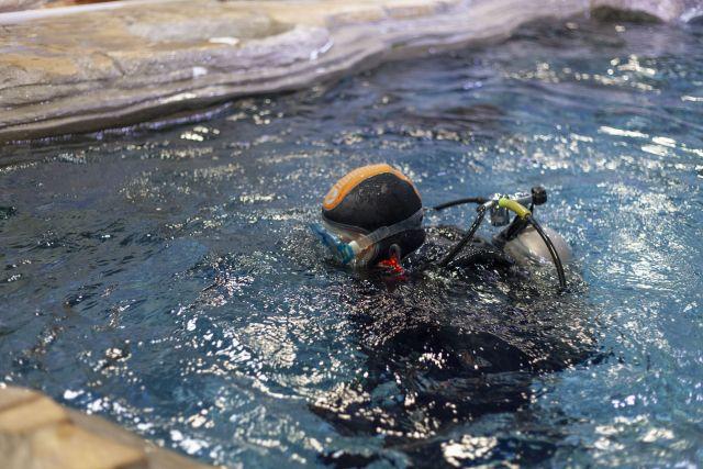 Водолазы Приморского океанариума показали свою работу в деле