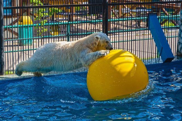 Медведи знают толк в отдыхе у воды.