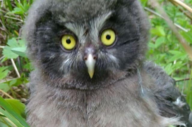 Хищных птенцов родители кормят два раза в день. Возможно, их не оказалось рядом, потому что они охотятся.