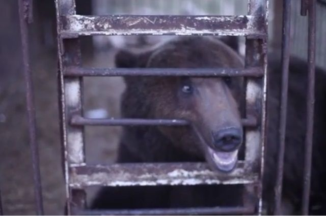 Миша из Бикбарды живет в клетке около трассы.
