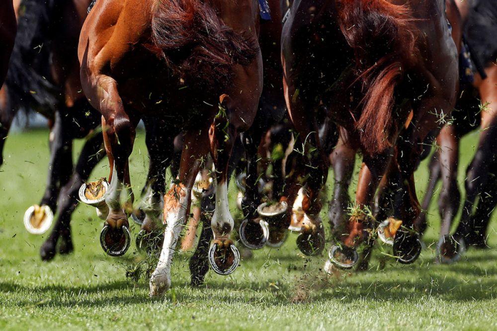 Лошади на скачках Royal Ascot, Аскот, Великобритания.