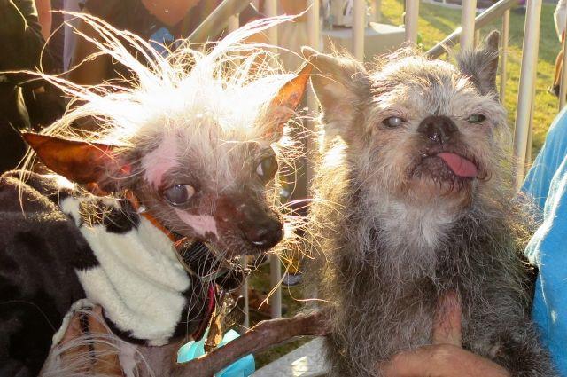 В США выбрана самая уродливая собака - Real estate