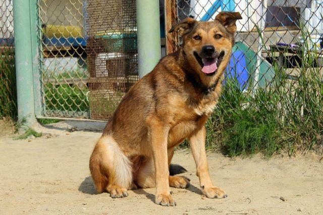 Коммунальщики Губкинского позаботились о бездомных животных