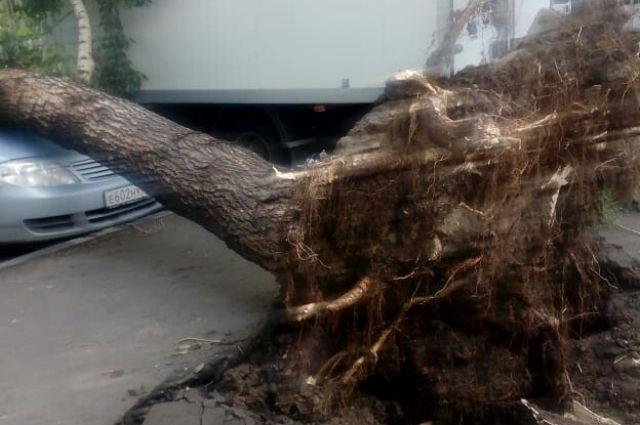 Из-за сильного ветра падали деревья.
