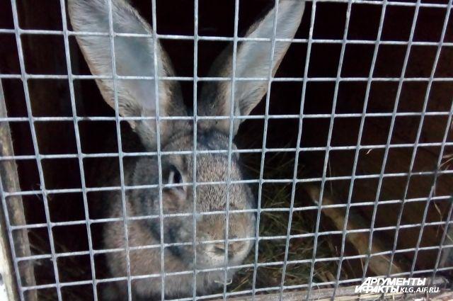 Калининградец за кражу кроликов, пилы и парников сел в тюрьму на 2,5 года.