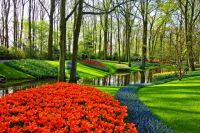Ко Дню города Тюмень украсят миллионы цветов