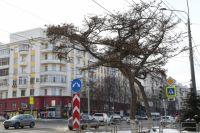 Даурские лиственницы способны придать даже обычной улице экзотический вид.