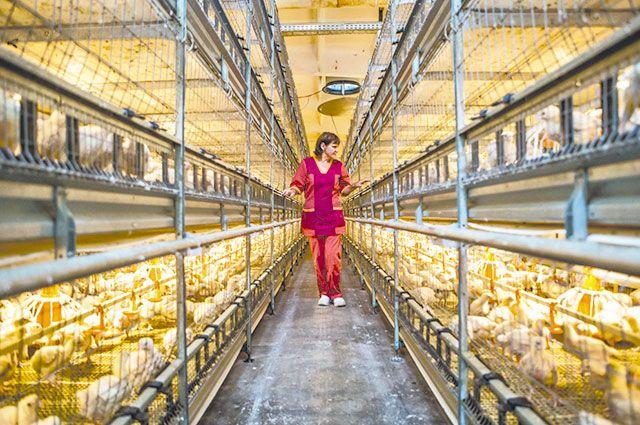 Сельское хозяйство - это высокотехнологичная сфера деятельности с комфортными условиями труда.