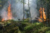 В Пуровском районе тушат лесной пожар