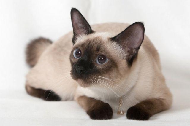 Финансист украл у своей фирмы 500 тысяч долларов и потратил их на котов