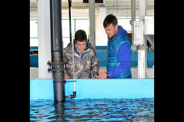 Ямальские реки пополнят 36 млн. мальков пеляди, чира и муксуна