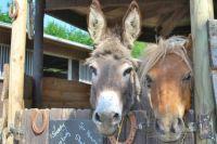 Лошади, ослики, пони и верблюды не только милые, но и опасные.