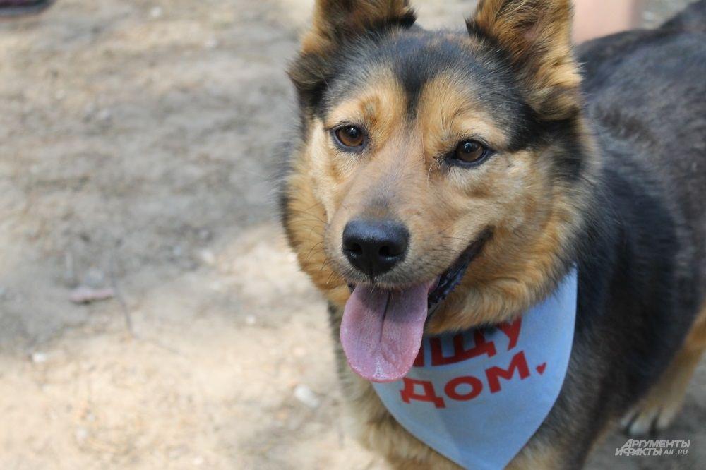 Собаки, которые ещё не нашли нового хозяина, ходили в специальном синем платочке