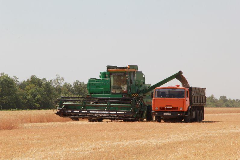 Уборка зерновых в Ростовской области проходит в непростых погодных условиях.