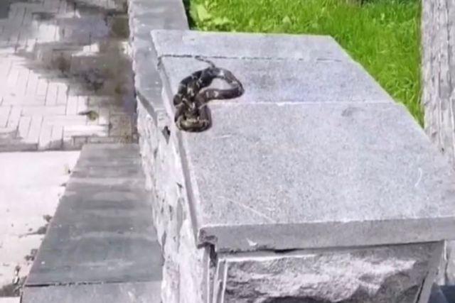 С наступлением тёплых дней змеи чаще стали вылазить - погреться на солнышке.