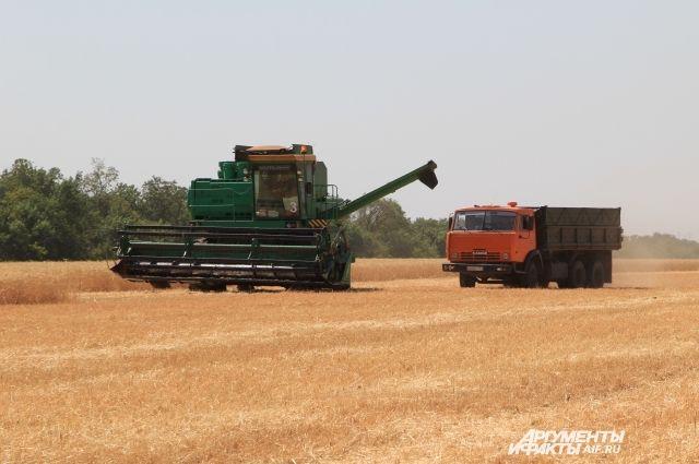 В Ростовской области урожай ожидают среднестатистического уровня