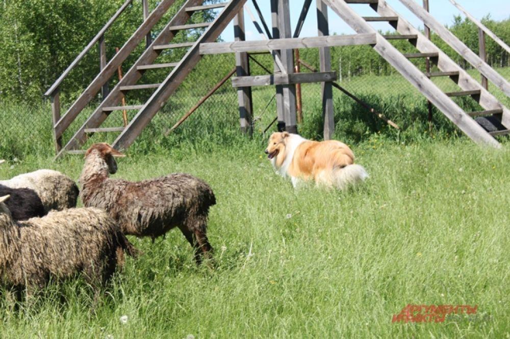 После активных тренировок животные отправились отдыхать.