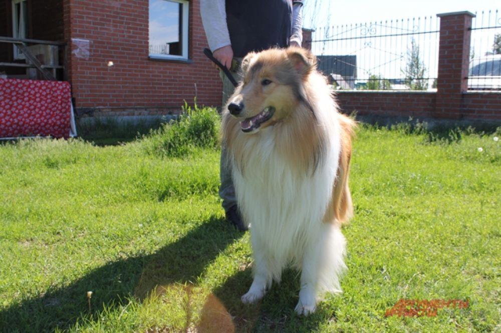 Например, в этот день на тренировки приехал милый пушистый пес, которого дома ласково называют Пряником.