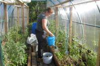 Подкармливать растения нужно два раза в сезон.