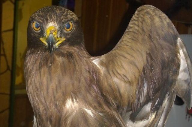 Такие птицы не только редкие, но и капризные в содержании.