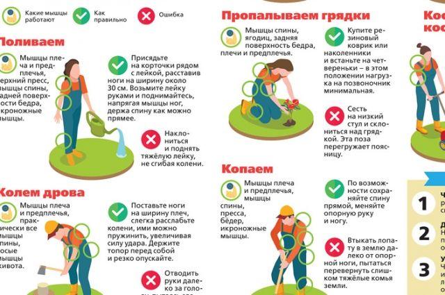 Огородный фитнес. Инфографика