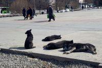 Зоозащитники Тюмени призывают горожан поить в жару бездомных животных