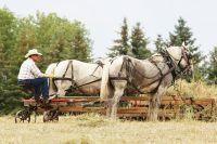 Туристам предлагают на себе ощутить все прелести фермерской жизни.