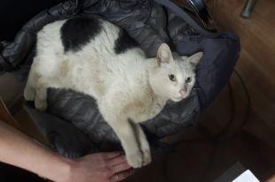 Ветеринар сказала, что Боне уже больше 10 лет. И в таком пожилом возрасте он обрел новый дом.